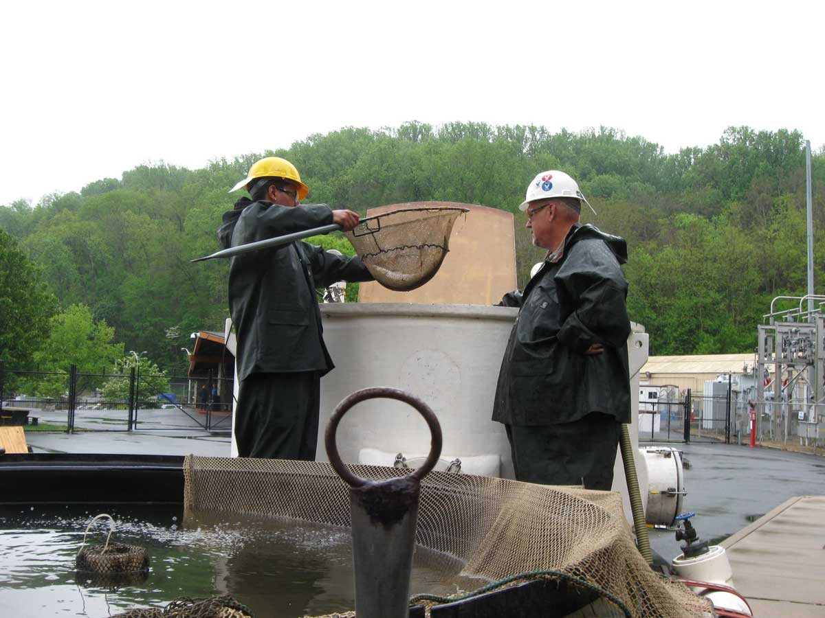 hydroelectric dam fish passage environmental consulting services