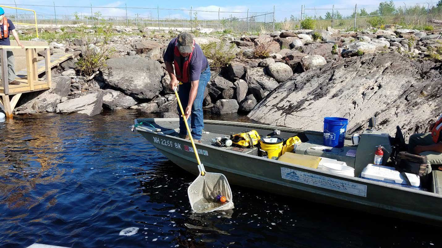 boat crew capturing river herring - top environmental consulting services firm normandeau associates